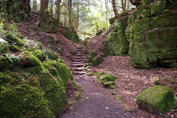 Загадочный лес Пазлвуд в Англии (12)