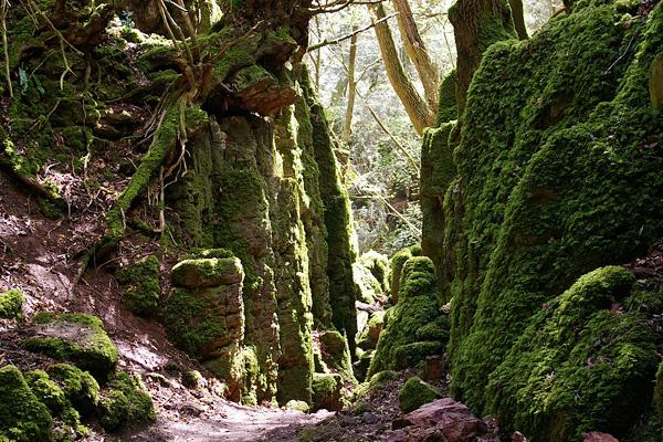 Загадочный лес Пазлвуд в Англии (11)
