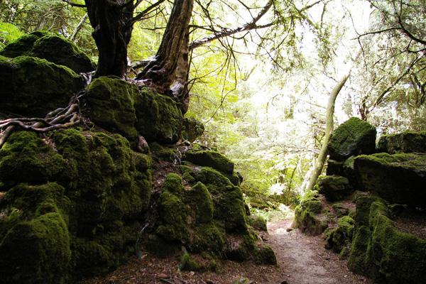 Загадочный лес Пазлвуд в Англии (10)