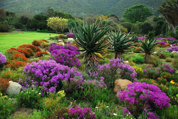 Роскошный сад Кирстенбош в Южной Африке