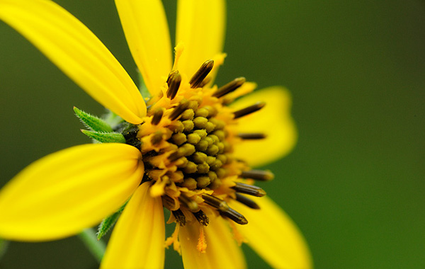 Cамые редкие цветы в мире