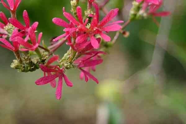 Самые редкие цветы мира фото 3