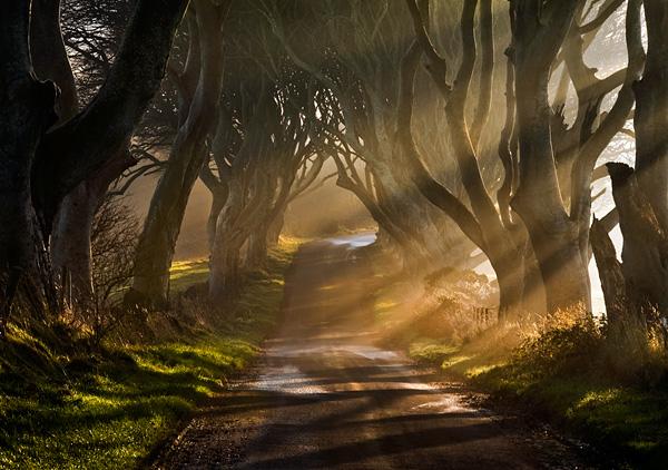 Тоннель Темный тупик в Ирландии