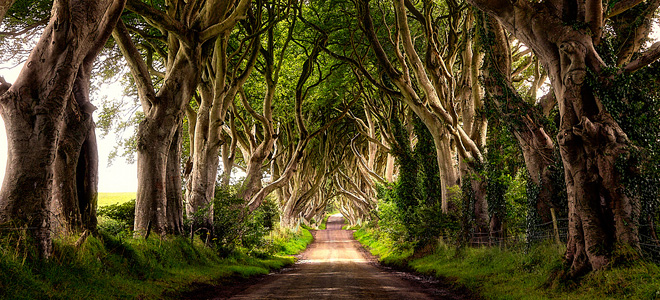Тоннель Темный тупик в Ирландии (7 фото)