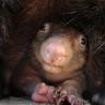 Топ-21: Самые необычные животные мира — 1