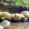Живые камни трованты на территории Румынии