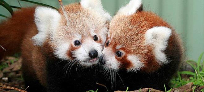 Топ-29: Такие милые детеныши животных — 2