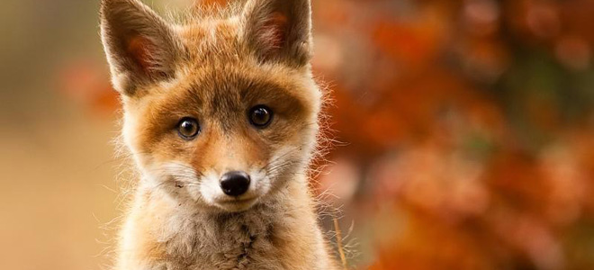 Топ-29: Такие милые детеныши животных — 1
