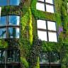 Патрик Бланк и его вертикальные сады (15 фото)