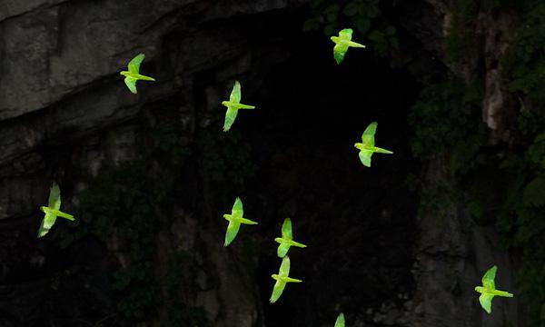 Пещера Ласточек в Мексике