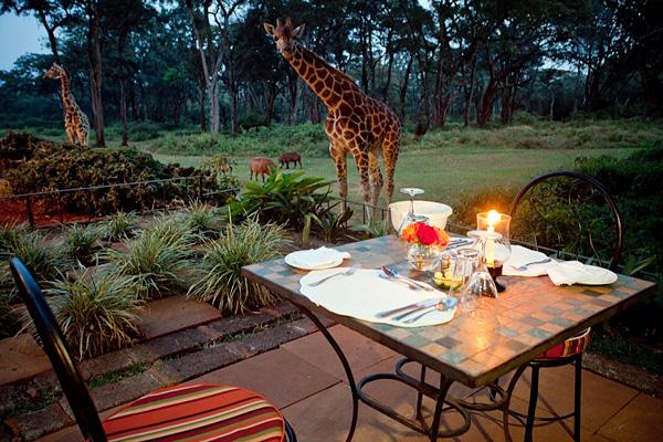 Поместье жирафа в Найроби