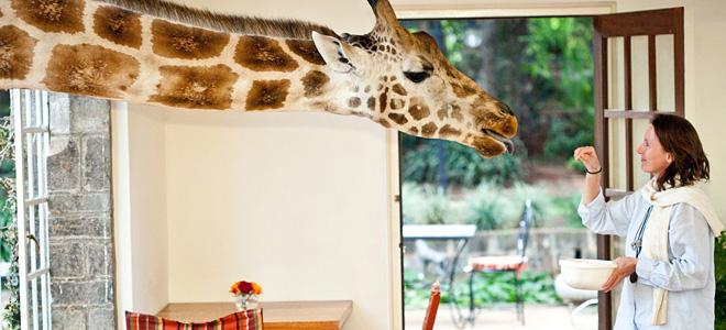Поместье жирафа в Найроби (9 фото)