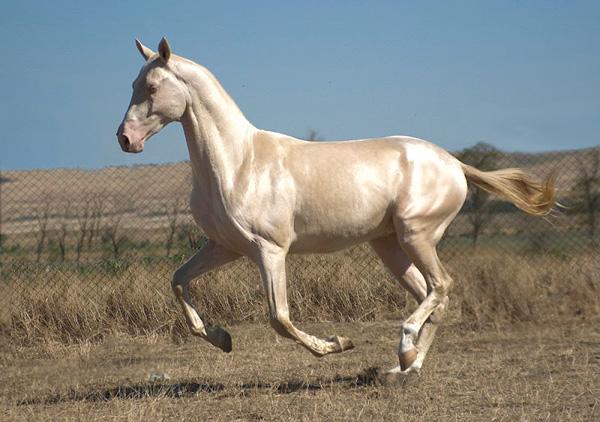 Картинки по запросу самой красивой лошадью в мире