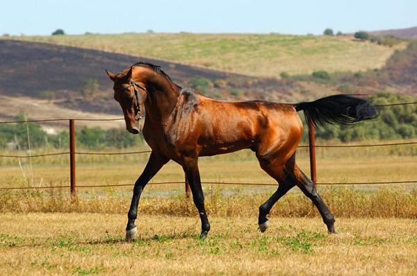 Самая красивая лошадь в мире