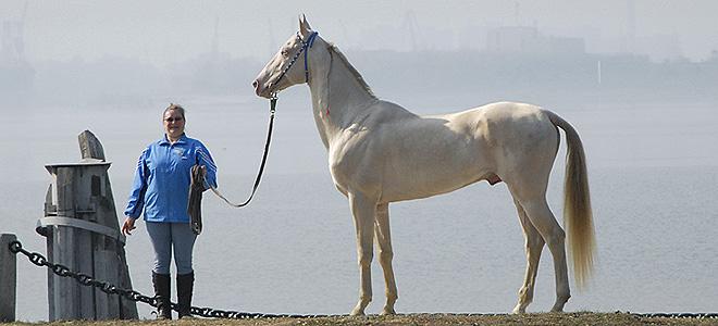 Самая красивая лошадь в мире (9 фото)