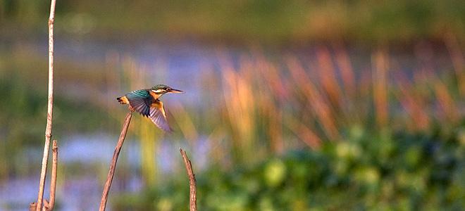 Топ-13: Самые красивые птицы мира