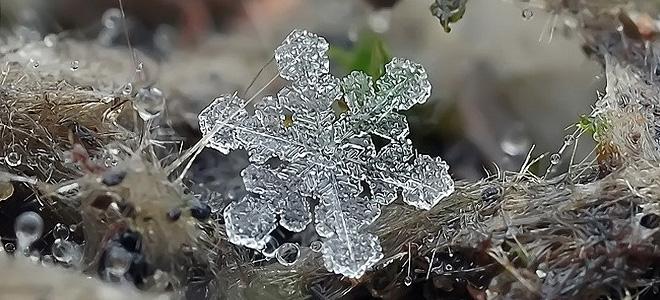 Красивые снежинки Андрея Осокина — 1 (11 фото)