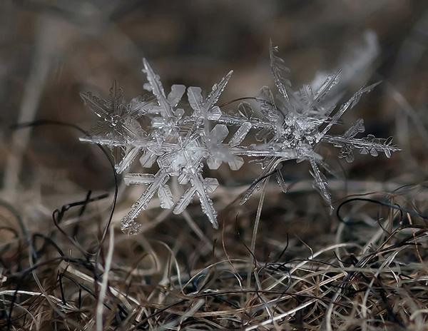 Красивые снежинки Андрея Осокина