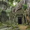 Гигантские деревья в храме Та Пром в Камбодже (13 фото)