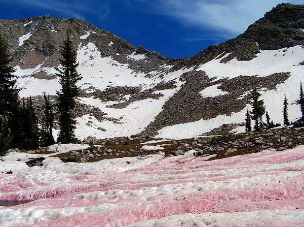 Красный арбузный снег