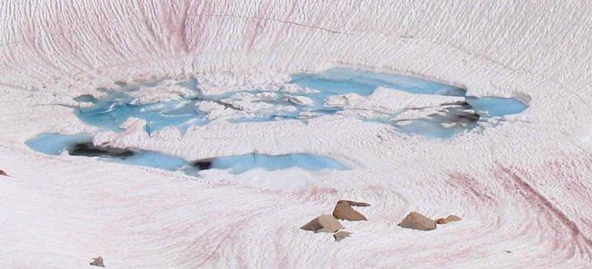 Красный арбузный снег (7 фото)