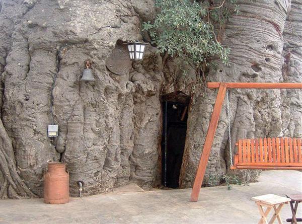 Паб внутри баобаба Санленд