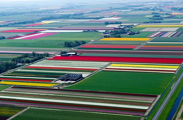 Поля тюльпанов в Голландии