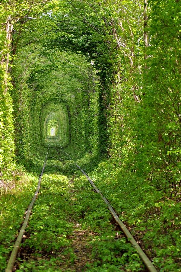 Тоннель любви близ деревни Клевань