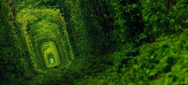Тоннель любви близ деревни Клевань (7 фото)