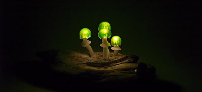 Светящиеся грибницы Юкио Такано (9 фото)