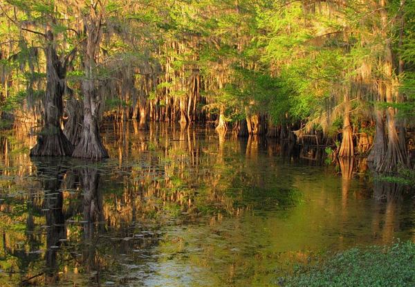 Загадочные кипарисы на озере Каддо