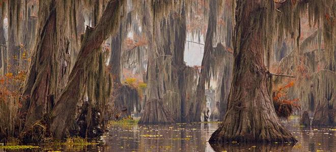 Загадочные кипарисы на озере Каддо (17 фото)