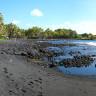 Черный пляж Пуналу на Гавайях (9 фото)
