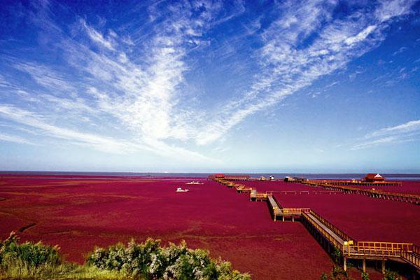 Красный пляж Паньцзинь в Китае