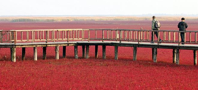Удивительный красный пляж Паньцзинь в Китае (9 фото)