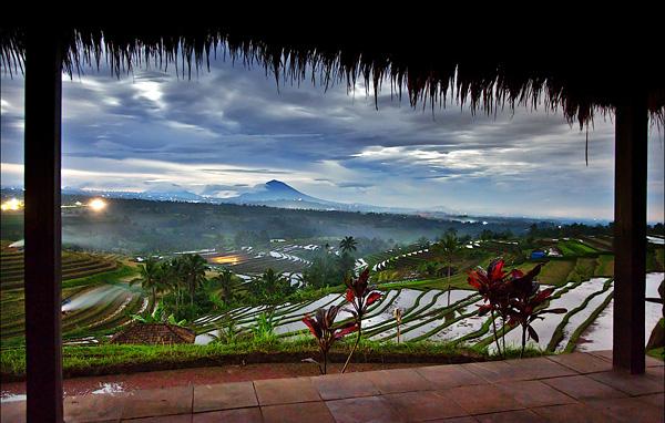 Рисовые поля Бали и Китая