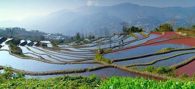Изумрудное спокойствие рисовых полей (13 фото)