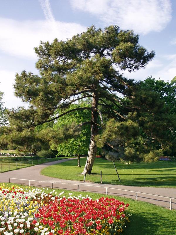 Зоопарк и ботанический сад Вильгельма