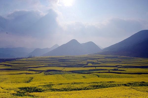 Золотые поля рапса графства Люопинг
