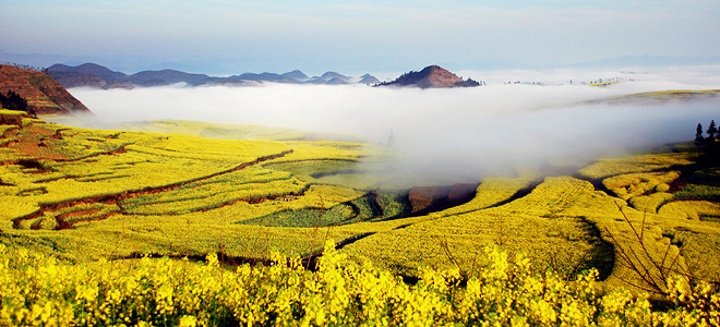 Золотые поля рапса графства Люопинг (7 фото)