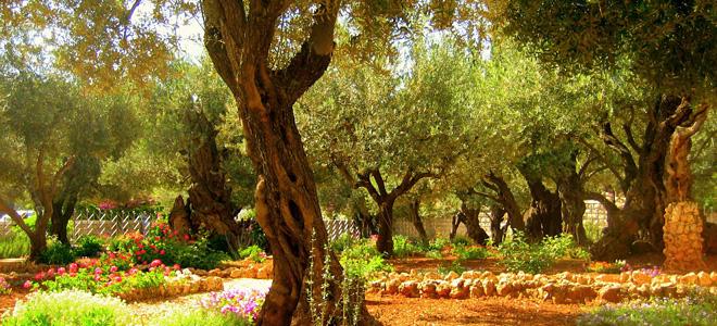 Гефсиманский сад (9 фото)