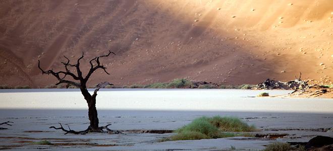 Мертвая долина в Намибии (9 фото)