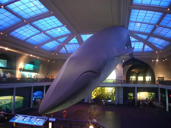 Синий кит - cамое большое животное на планете