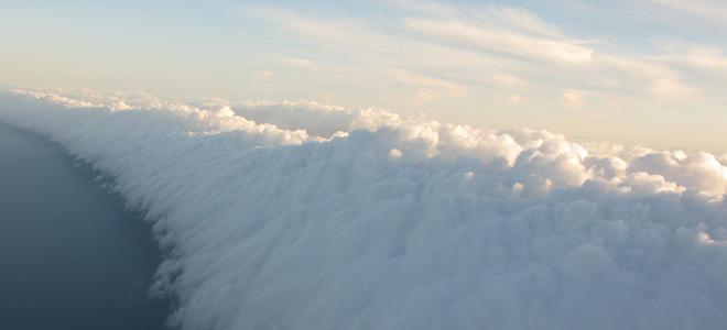 Утренняя глория (5 фото)