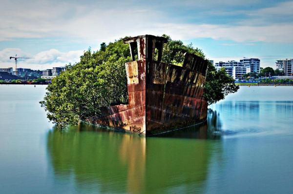 «Плавающий лес» на заброшенном SS Ayrfield