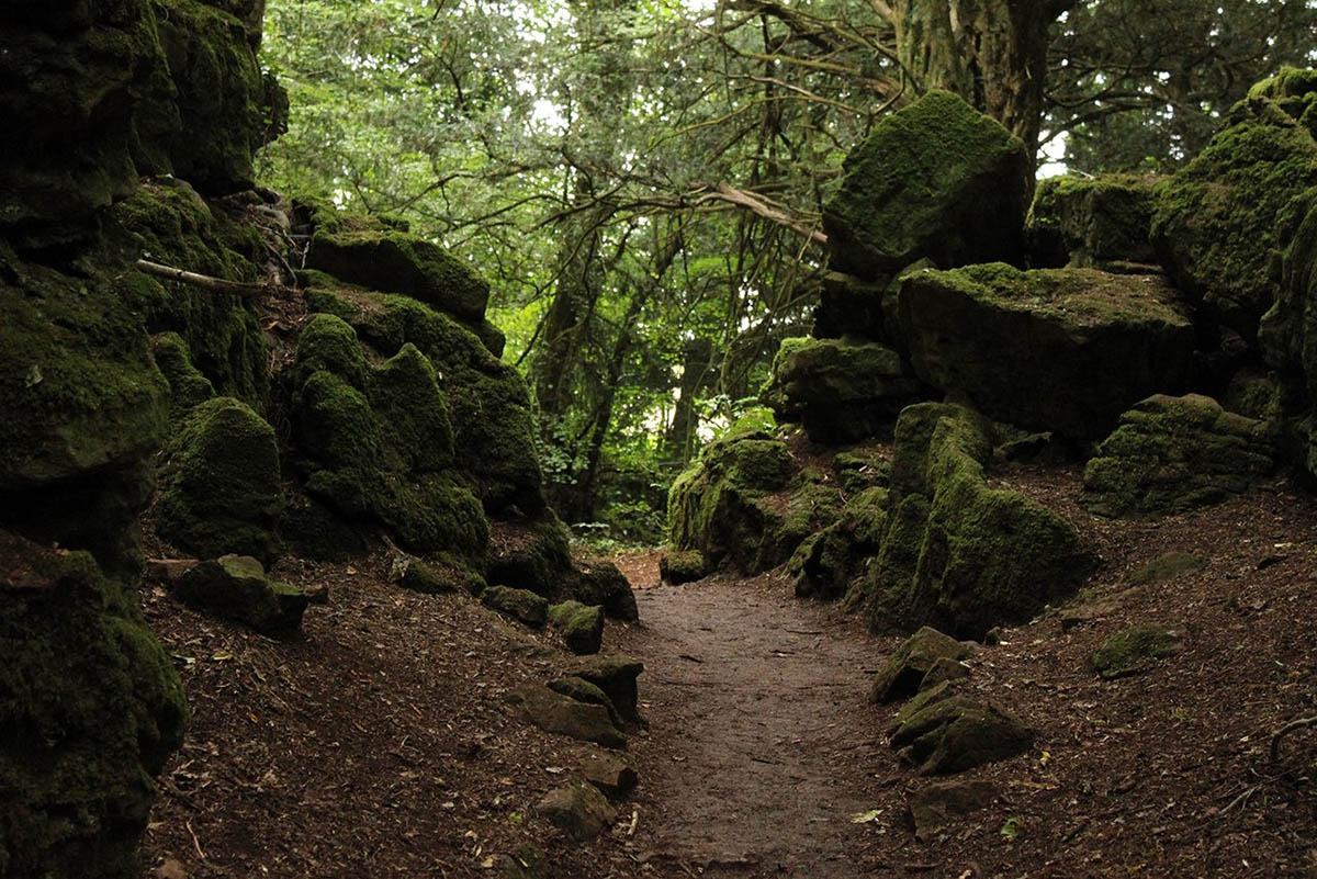 Puzzlewood-forest-England