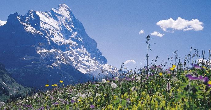 Дикая красота Альп