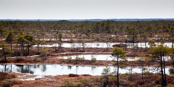 Заповедный парк Кемери в Юрмале